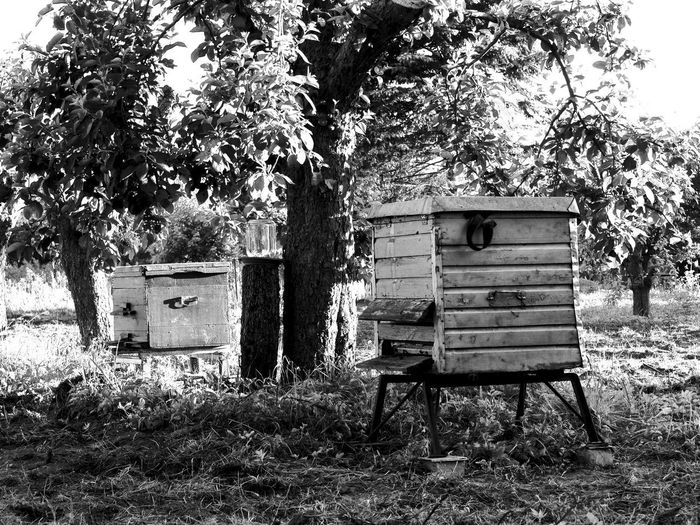 ..kind of love. Bees Black & White Aple Tree Beehives Garden Hive Sunrise Vilage