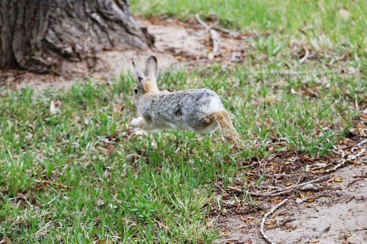 Close-up of squirrel running