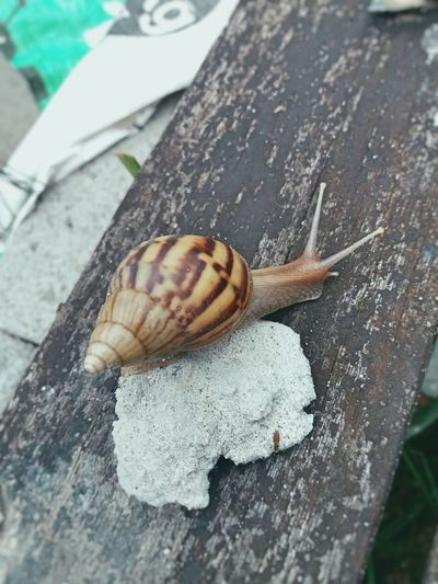 Animals Snail🐌 Browncolor 달팽이