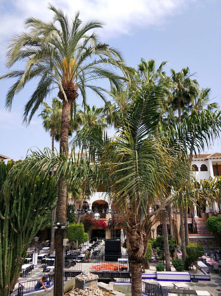 Villamartin, Spain - April 7, 2018: View of Villamartin Plaza. Villamartin Plaza lined with a bars and restaurants. Beautifully landscaped gardens and fountains. Costa Blanca. Spain Bars And Restaurants Costa Blanca Orihuela  Palm Tree Restaurants SPAIN Square Summertime Sunny Vacations Architecture Building Building Exterior Built Structure Commercial Day Europe Landscaped Lush Foliage Outdoors Plant Plaza Springtime Summer Villamartin