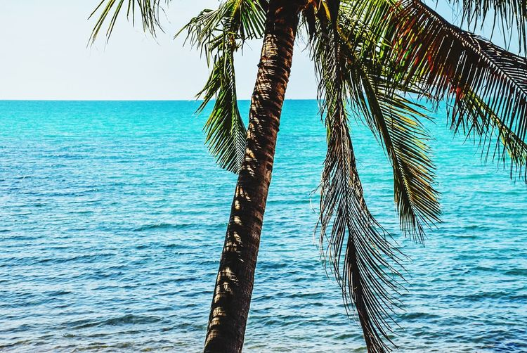 Sea And Sky Water Tree Coconut Tree Choburi