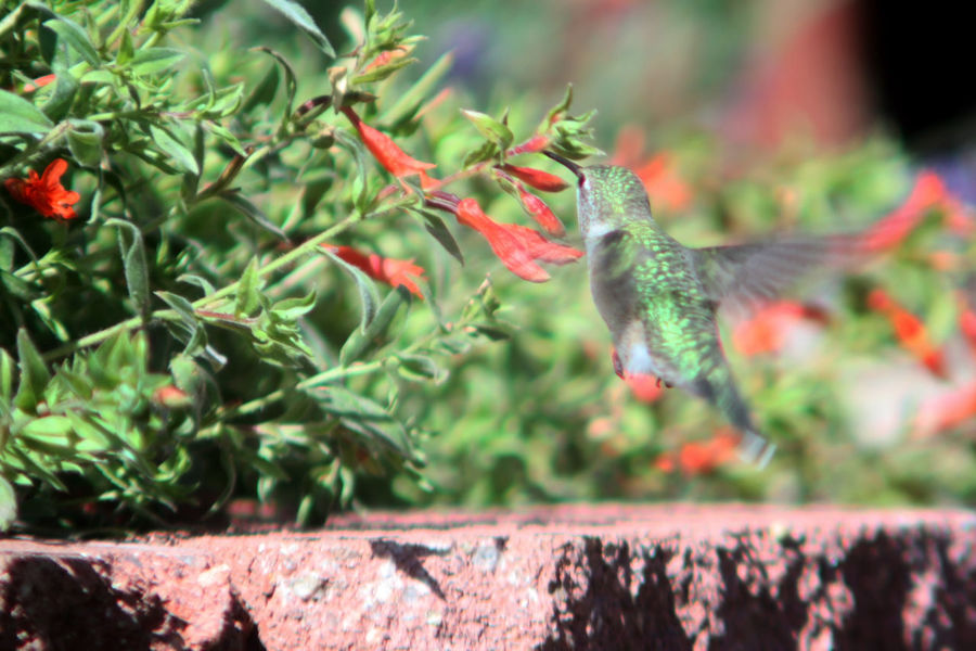 First attempt at hummingbird photography Animal Animal Themes Animal Wildlife Animals In The Wild Bird Close-up Day Focus On Foreground Food Growth Nature No People One Animal Outdoors Plant Plant Part Selective Focus Squirrel Tree Vertebrate