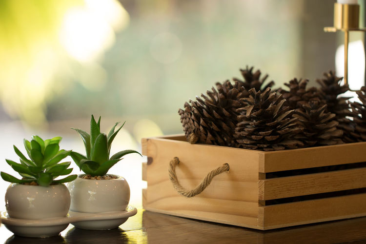 Pine cones used to decorate Christmas trees are placed in a wooden box near the plant in a white pot. Plant Table Potted Plant No People Container Nature Indoors  Leaf Focus On Foreground Still Life Close-up Plant Part Freshness Wood - Material Food And Drink Home Interior Succulent Plant Food Growth Wellbeing Houseplant Pine Tree