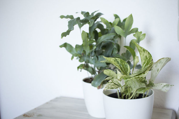 Copy Space Flower Pot Green Color Growth Home Interior Houseplant Indoors  Leaf No People Plant Plant Part Potted Plant Still Life