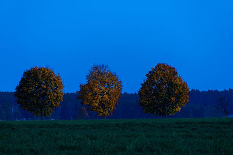 Plant Tree Blue