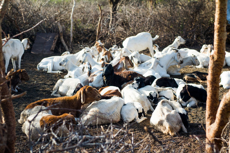 Drought Kenya Africa Cattle Climate Change Cow Day Fur Herd Animal Nature Outdoors An Eye For Travel EyeEmNewHere