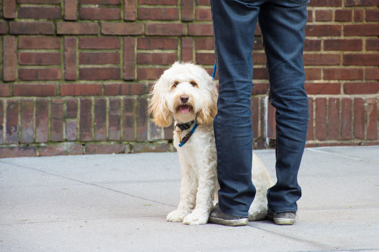 The Street Photographer - 2018 EyeEm Awards Brick Brick Wall Canine Casual Clothing Dog Domestic Domestic Animals Human Leg Jeans Low Section Mammal One Animal One Person Pet Owner Pets Shoe Standing Wall