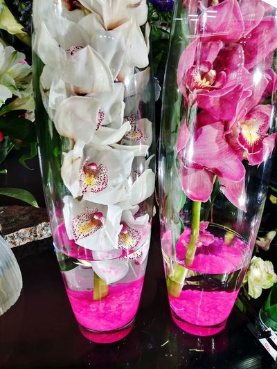 EyeEm Best Shots Pink Orchid White Orchid Orchids Contrast Vase Flowers Flowers_collection Floral White Flowers Pink Flowers Pink And White Pink And White Flowers Bold Bold And Beautiful Beautiful Gorgeous Stunning Speckled Flower Neon Pink Bright Pink Bold Colors Blooming For Sale Retail Display
