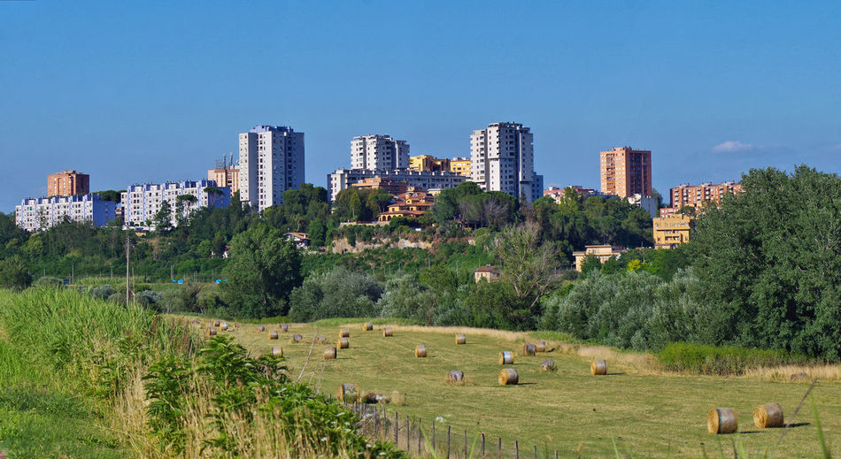 Panoramic shot of trees and buildings against clear sky