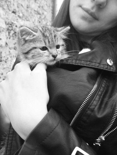 Babe Cat Baby Blackandwhite Cute