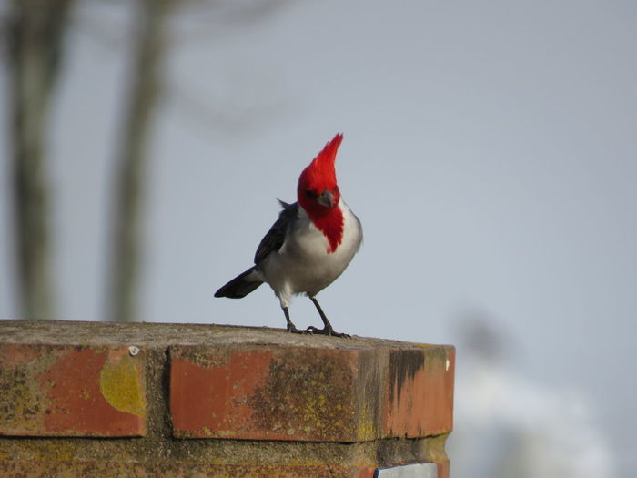 Bird Photograph