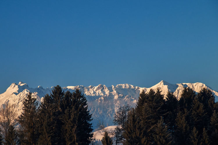 The tame emperor with his crown in the evening sun, view from the village kössen in austria tyrol