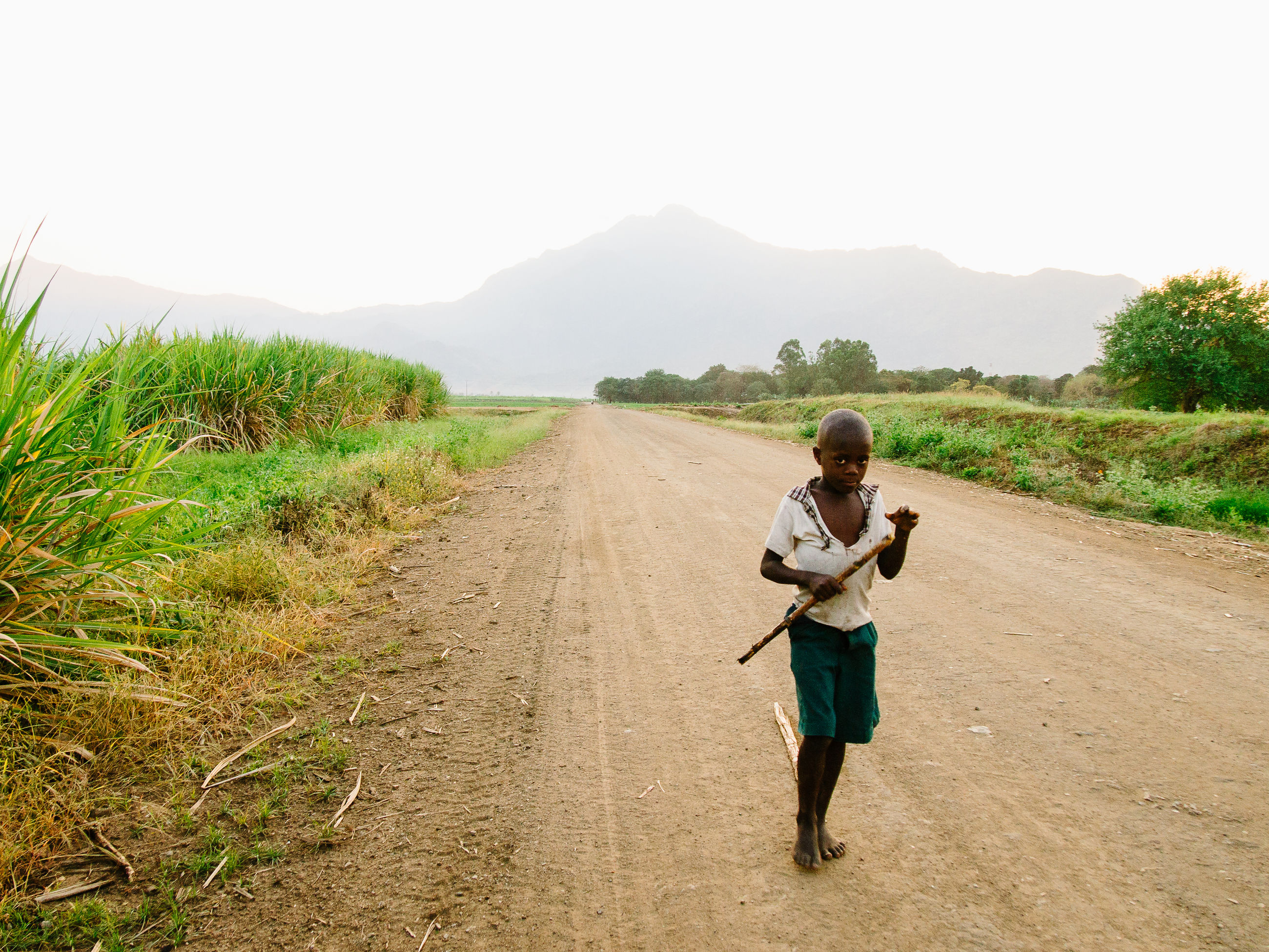 full length, lifestyles, casual clothing, leisure activity, rear view, childhood, clear sky, boys, walking, grass, field, landscape, the way forward, elementary age, sky, dirt road, girls, backpack