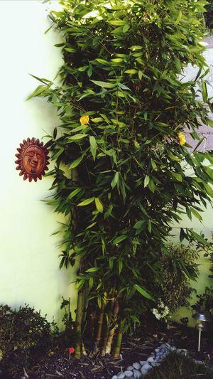 Feeling Thankful Gracias a esta hermosa combinacion... Rosa y Bambu!