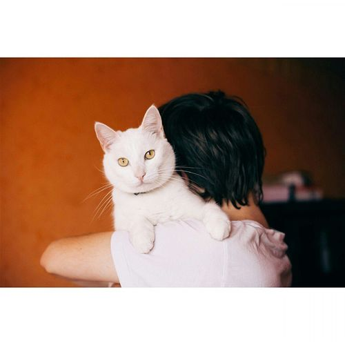 VSCO Incatswetrust Catstagram Цыпа