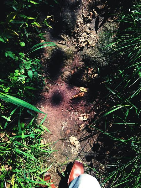 Finding my path Exploration Trekking Bones Scavanging Cannibal Daylight Forest Life And Death One Man Only Grass EyeEm Ready   The Traveler - 2018 EyeEm Awards
