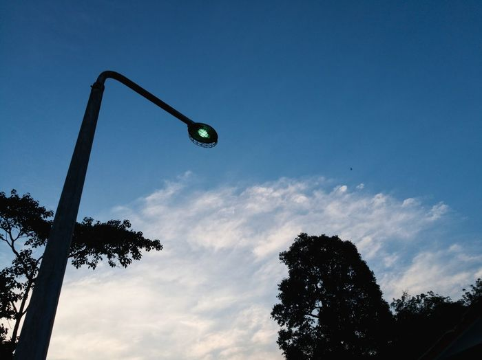 Standing lamp Low Angle View Silhouette Sky No People Tree Outdoors Day Lamp Light Lights Light And Shadow Honor 8 Huaweiphotography Honorphotography Malaysia Streetphotography Street Electricity  Blue The Week On EyeEm