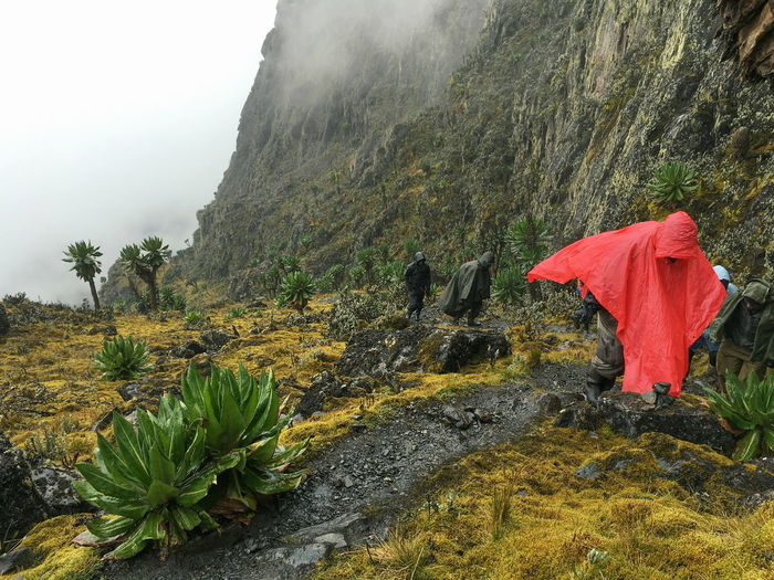 A group of hikers wearing ponchos on a rainy day at rwenzori mountains, uganda