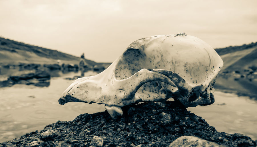 Close-up of animal skull by river against sky