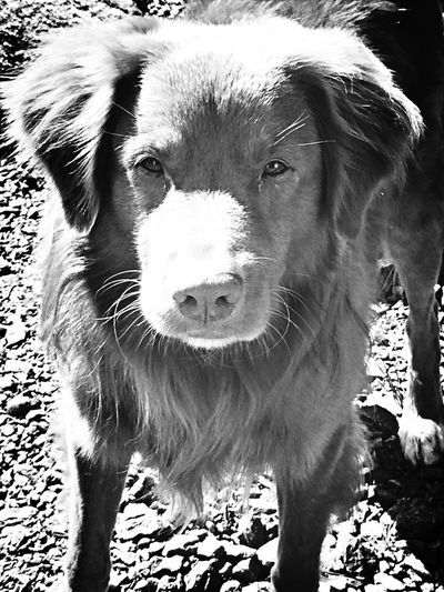 Dog Black & White Cute Pets Taking Photos