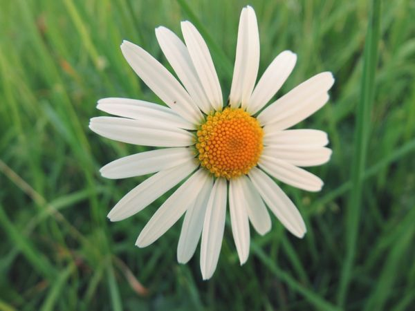 Flover Nature White Color Beauty In Nature Growth Close-up Day Outdoors Green Color Springtime Summer No People Beauty Flower Pollen Freshness Flower Head Plant Petal Fragility Flowerbed