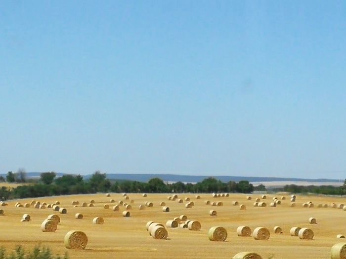 Drivebyphotography Blue Sky Summer Harvest Rural Scene Clear Sky Agriculture Blue Sky Hay Bale Farmland
