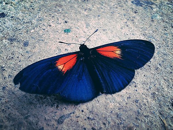 Mariposa Beautiful Nature Nature Photography Insect Photography Macro Photography Colombia Nature Insects  Buterfly