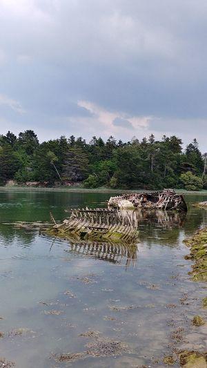 Benodet Bretagne France Epaves Wreek Water Tree Lake Sky Animal Themes