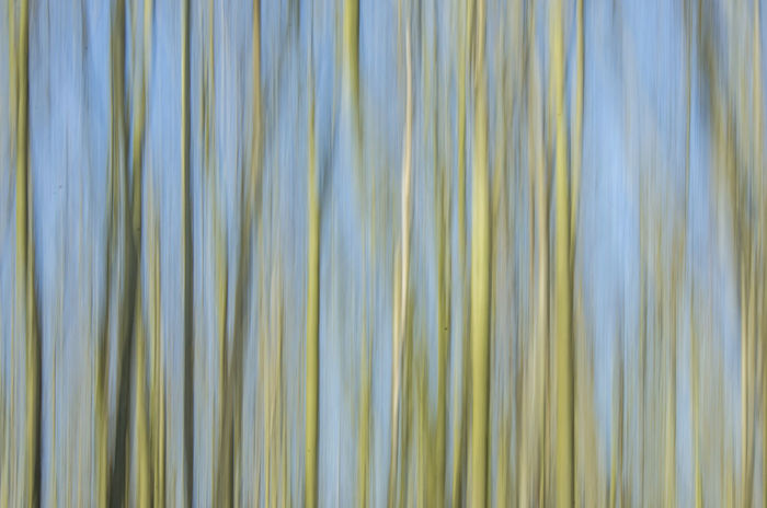 Backgrounds Moves Nature No People Trees Trees And Nature Trees And Sky Trees Collection Treescollection