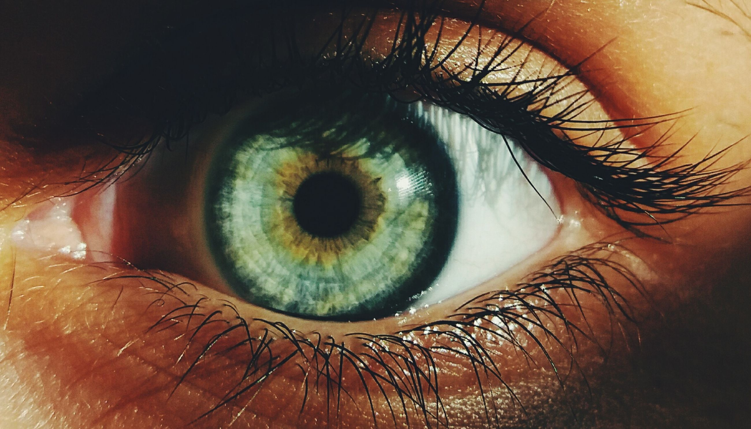 human eye, eyelash, eyesight, human body part, iris - eye, eyeball, real people, looking at camera, macro, extreme close-up, one person, close-up, sensory perception, people, portrait, young adult, outdoors, adults only, adult, day