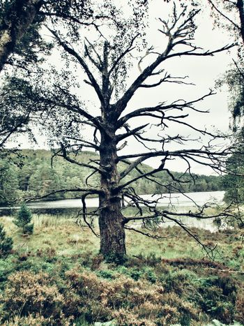 Tree Nature Growth Grass Beauty In Nature Outdoors Scenics No People Landscape Branch Loch An Eilein
