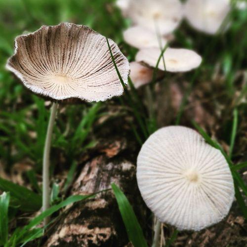 Flora Close-up Grass