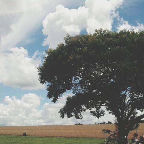 Nature On Your Doorstep UTFPR