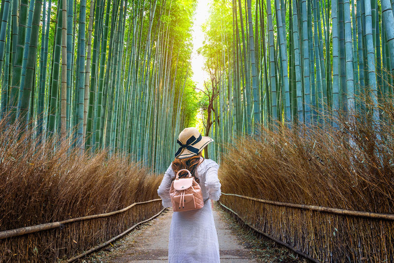 Woman walking at Bamboo Forest in Kyoto, Japan. Forest Plant Land Tree One Person Nature Bamboo - Plant Lifestyles Beauty In Nature Leisure Activity Adult Standing Green Color Real People Bamboo Grove Men Bamboo Direction Young Adult Outdoors
