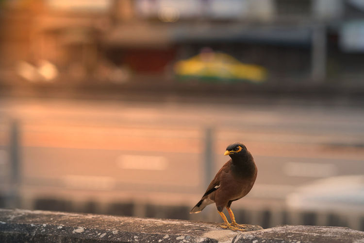 Close-up of bird perching on retaining wall