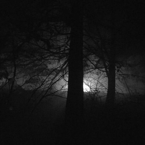 Dark woods are on my mind! Dark Woods Tree Bare Tree Tree Trunk Branch Silhouette Nature Tranquility