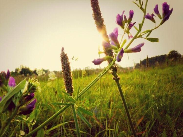Lithuania Nature <3