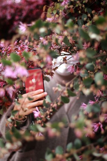 Person holding flowering plant