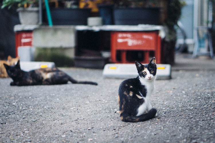 Animal Animal Themes Cat City Day Domestic Domestic Animals Domestic Cat Feline Focus On Foreground Looking At Camera Mammal No People One Animal Pets Portrait Sitting Street Vertebrate Whisker EyeEmNewHere