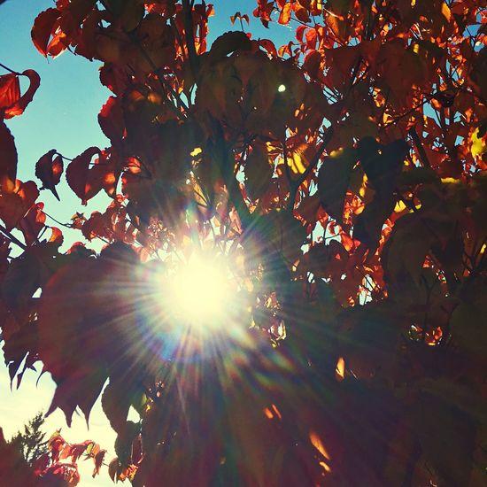 Hello World Enjoying Life Black Forest Autumn Colors Fall Beauty