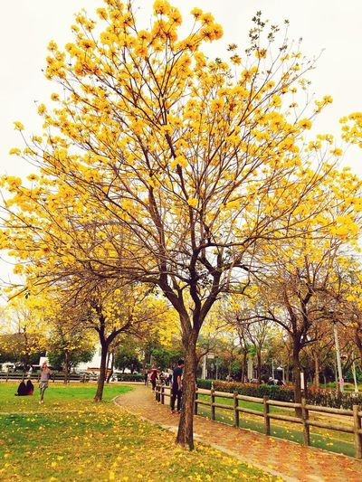 Taichungcity Tree Autumn Branch Park - Man Made Space Leaf Beauty In Nature Nature Outdoors