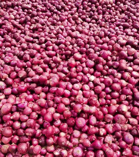 Full frame shot of onion