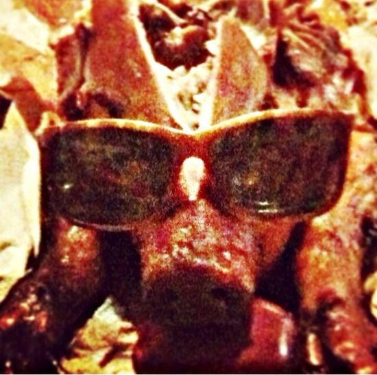 Pigroast Sunglasses Pig Yummy