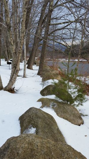Bare Tree Branch Cold Cold Temperature Covered Covering Day Forest Frozen Nature Nature New Hampshire Outdoors Peace And Quiet Pemigewasset River River River Thaw Riverscape Rocks Season  Snow Snow And Ice  Tree Trunk Weather Winter