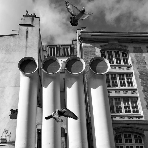 Air Vent Dancing 😀 Place Igor Stravinsky Paris France Centre Georges Pompidou Building Exterior Architectural Column Low Angle View Flying Sky City No People Pigeon Bird Bnw Blackandwhite Street Streetphotography Streetart