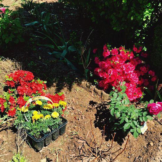 Grandma's garden. Grandmas Garden Garden Flowers Photography IPhoneography Nature Unprofessional
