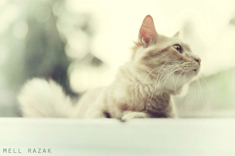 Cat. Vscoborneo Vscomalaya Vscocam VSCO Vscomalaysia Vscoperak Vscomalaysian Cat♡ Cat Lovers Cats 🐱 Cat Photography Cats