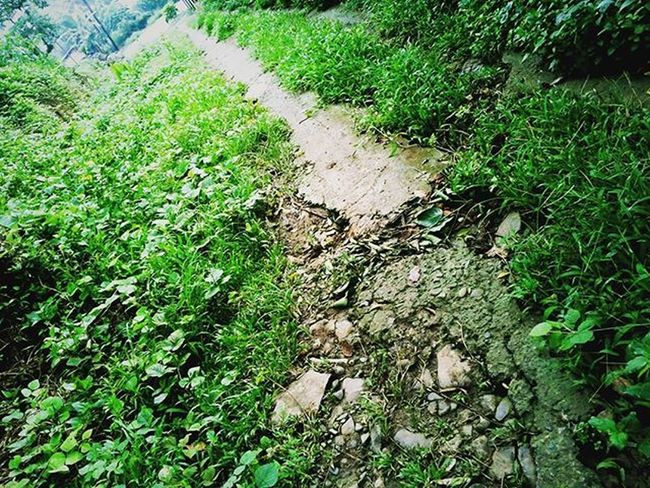 """--> This forgotten trail reminds me of a certain song... """"Where do broken hearts go?"""" Nature Natural NaturalBeauty Naturephotography Naturelovers Natureporn Trail Travel Trailrunning Trailblazer Adventure Trekking Hiking Hikingadventures Hikingtrail NatureTherapy Tropical Countryside Ig_countryside Photooftheday Photographer Naturepic Instapic Instanature Instadaily path green grass landscape landscape_captures"""