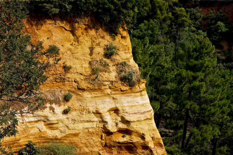 Low angle view of rock formations in forest