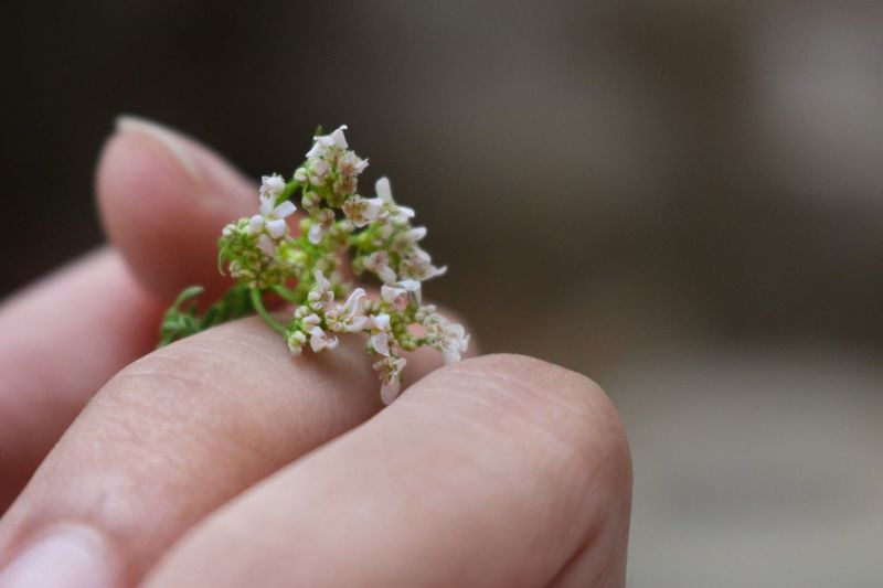 Queen Bee Sunlight Holding Green Winter Nature Leaf Close-up Hand Human Body Part Dried Dry Flower  Human Finger Flowers